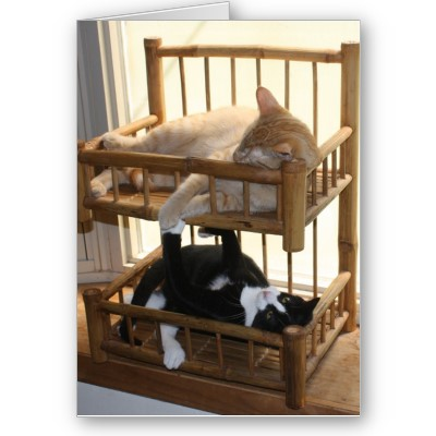 Beliche para Gatos Reciclado 2
