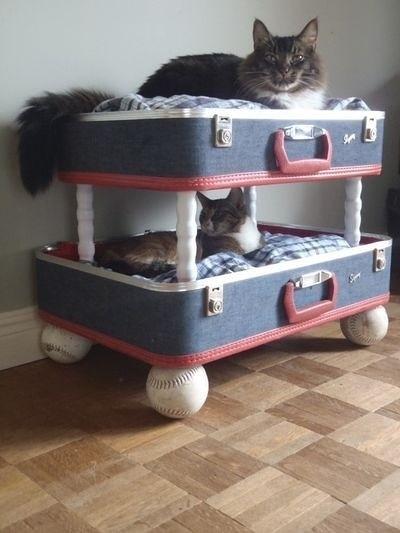 Beliche para Gatos Reciclado 3