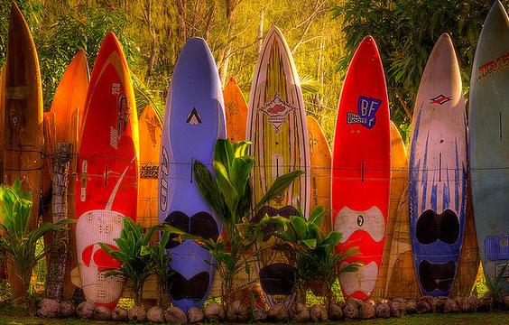 Cerca surf