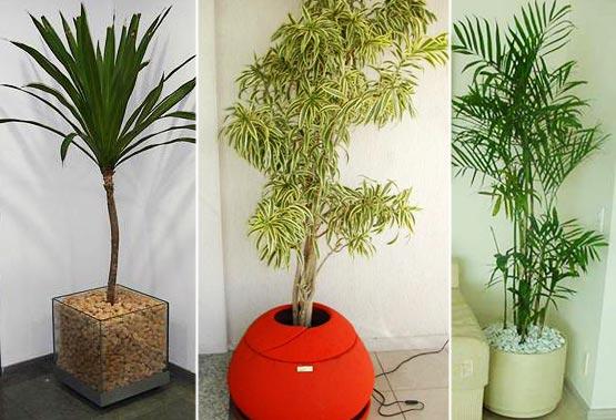 Como decorar com plantas