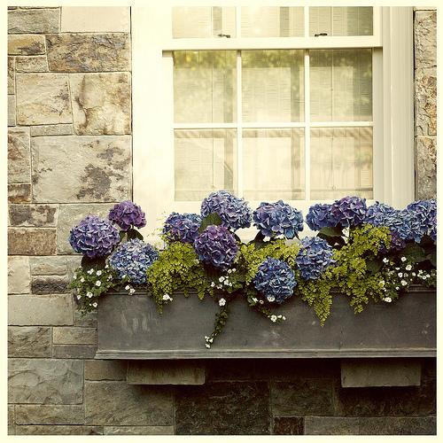 Jardineiras na decoração 8