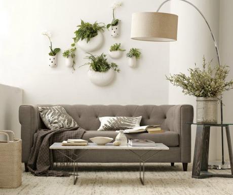 Plantas para decorar 4