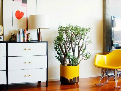 Plantas para decorar 8