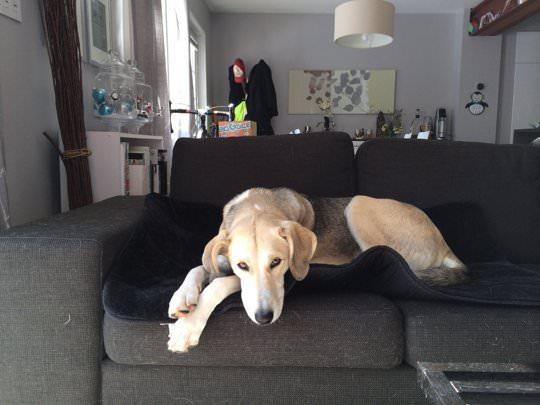 Decoração para cachorro 3