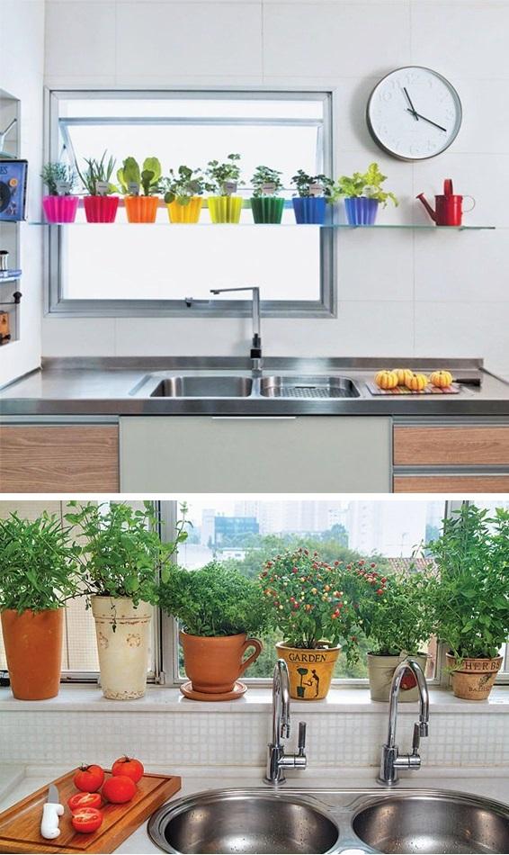 plantas para ter em casa 2
