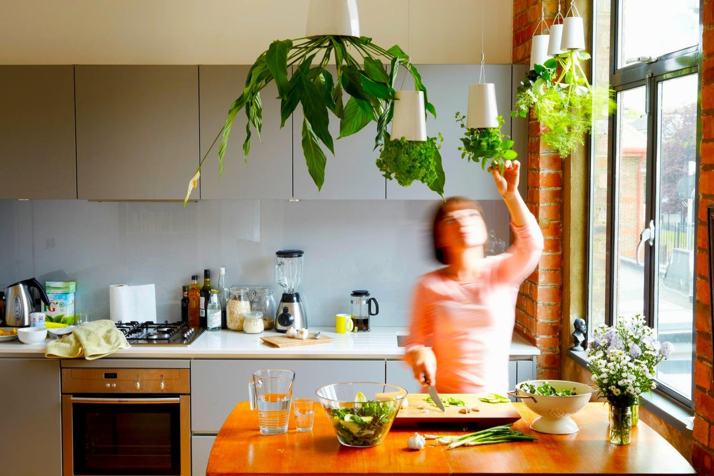 Horta dentro de casa 2