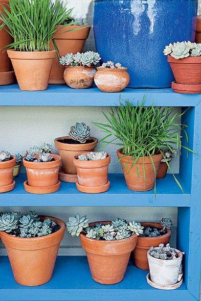 Plantas suculentas na decoração 3