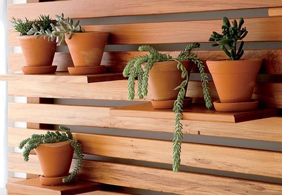 Plantas suculentas na decoração 7