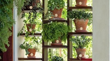plantas na vertical na decoração