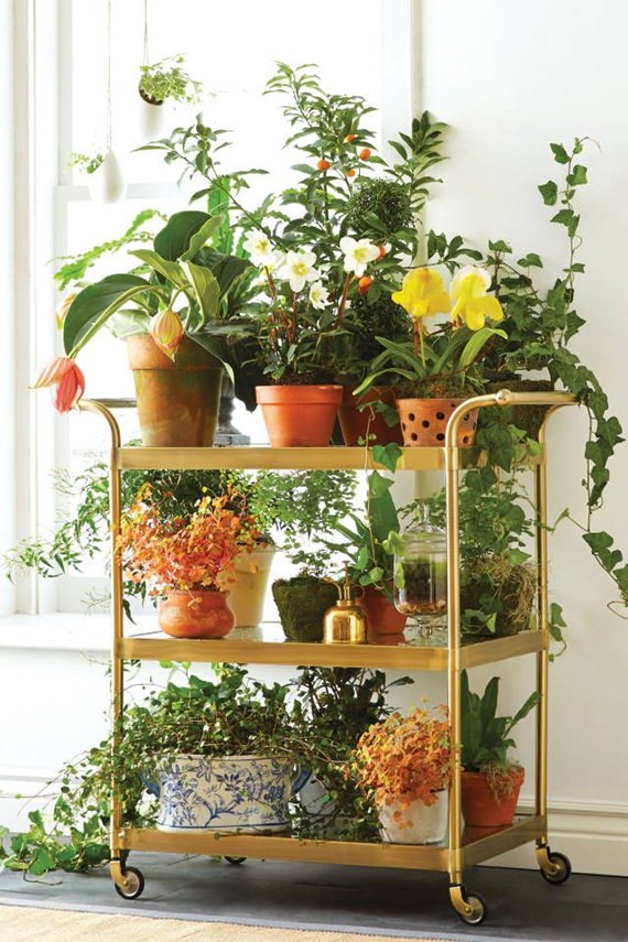 plantas na vertical na decoração 5