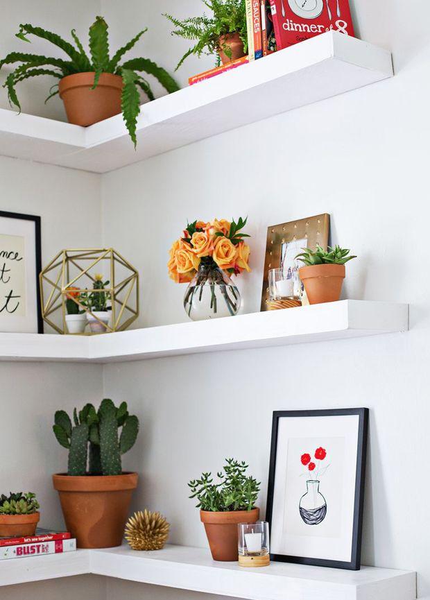 Plantas na decoração 2