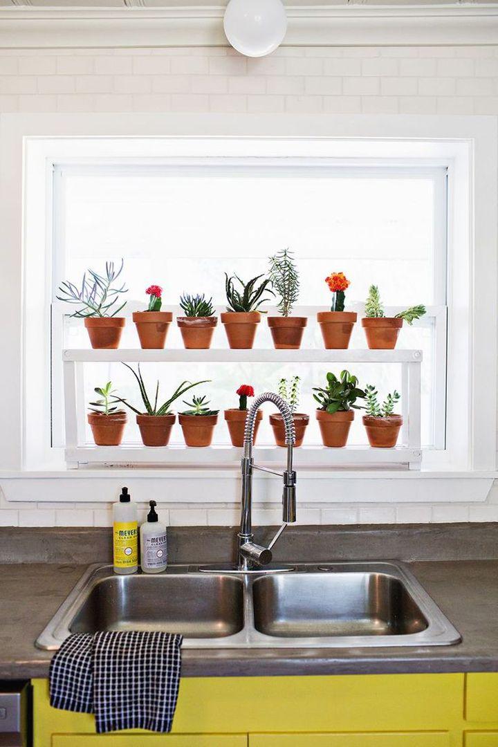 Plantas na decoração 5