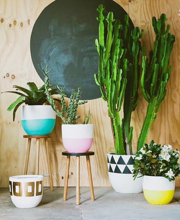 Como fazer suas plantas durarem 4