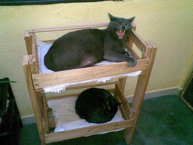 Beliche para Gatos Reciclado 4
