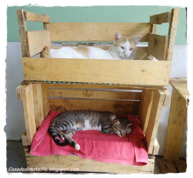 Beliche para Gatos Reciclado