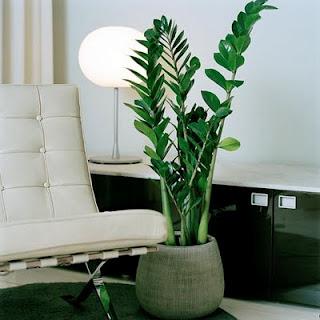 Dicas-de-decoração-com-plantas-ornamentais-2