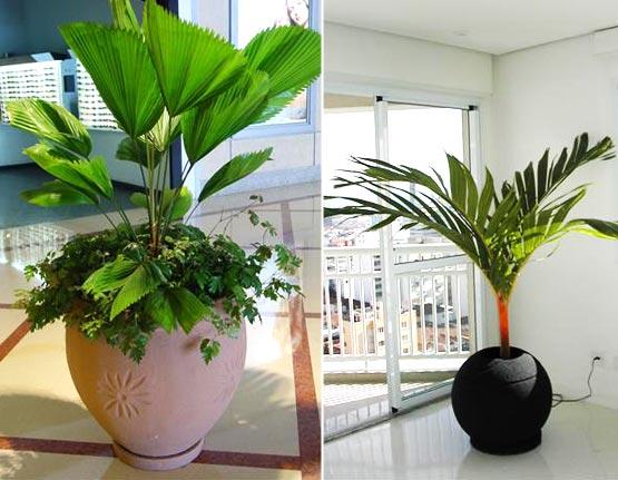 Flores naturais na decoração 3