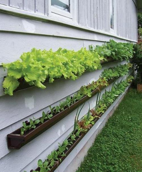 Jardim e horta vertical 8
